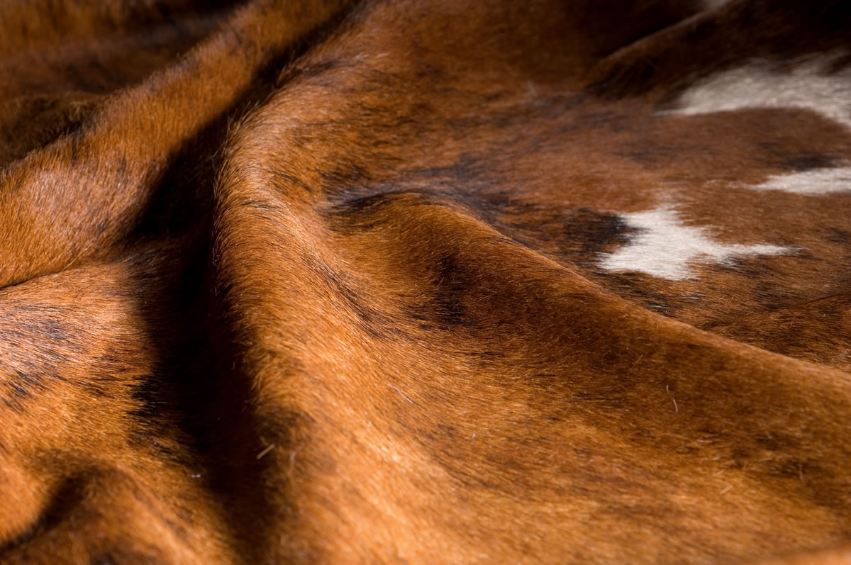 Hair on Cow Hide Rug