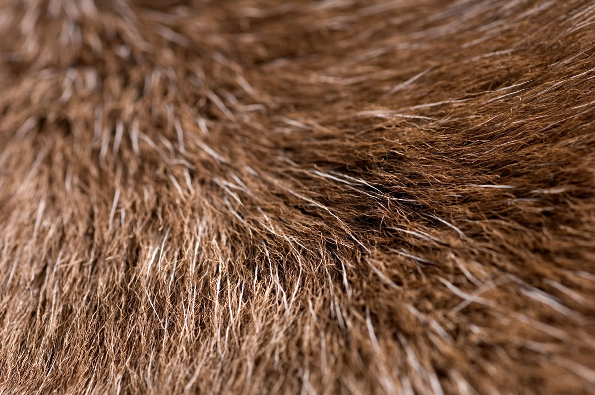 Reindeer Hide Rugs Closeup